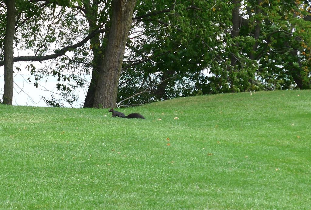 NOTL#7squirrel